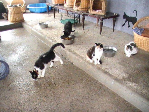 Les chats du refuge...