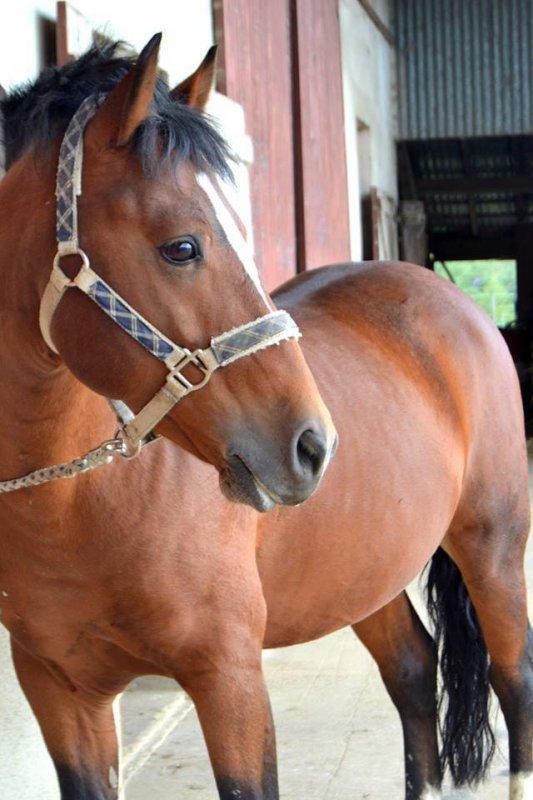 Regarde un cavalier sans son cheval, il lui manque la moitié de son sang