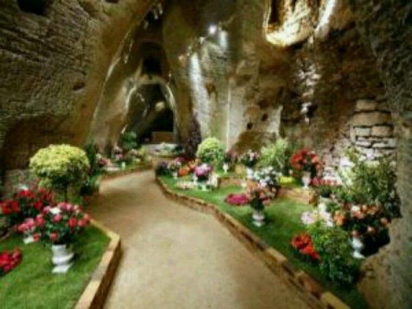 Le jardin des fleur