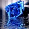 Une rose damour couvre mon coeur pour te dir je taime pcq je tien a toi