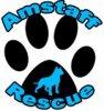 Amstaff-Rescue
