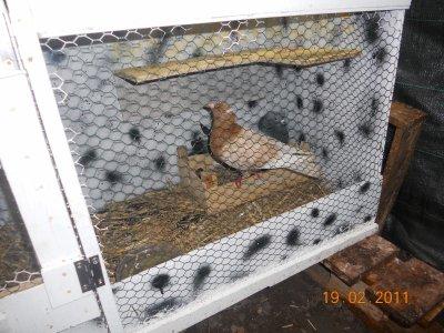 nouvel de mon pigeon rescaper!!!!!!!!!!!!!!!!!!!!!!!!!!!!!!!!!!!!!!!!!!!