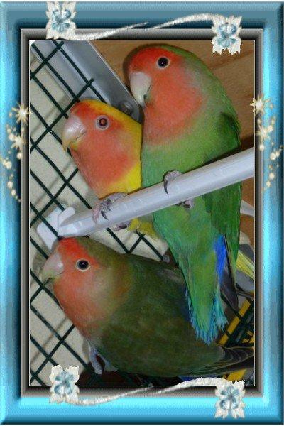 [size=16px][x=#20D5FA-#008080-#FF8040][align=center]5 - Mes oiseaux [/x]