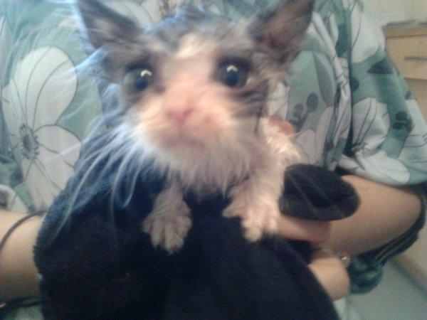 mon chat aprés le bain