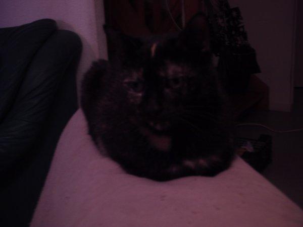 mon autre chat