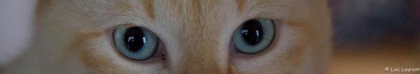 les yeux de cesar