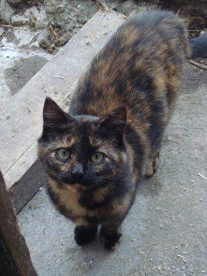 Lєs nouvєaux pєtits chats ;)