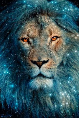 Il et beau mon lion