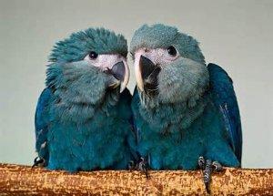 Les espèces de Perroquets.