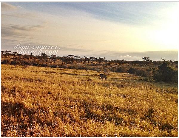 *22.08.2013 : Demi et ses amies sont parties en safari, dans la savane africaine.      *