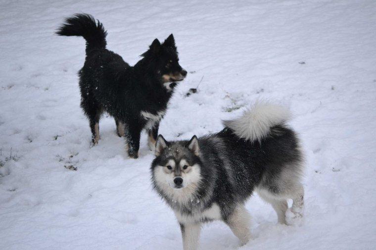 La neige - 2 décembre 2012
