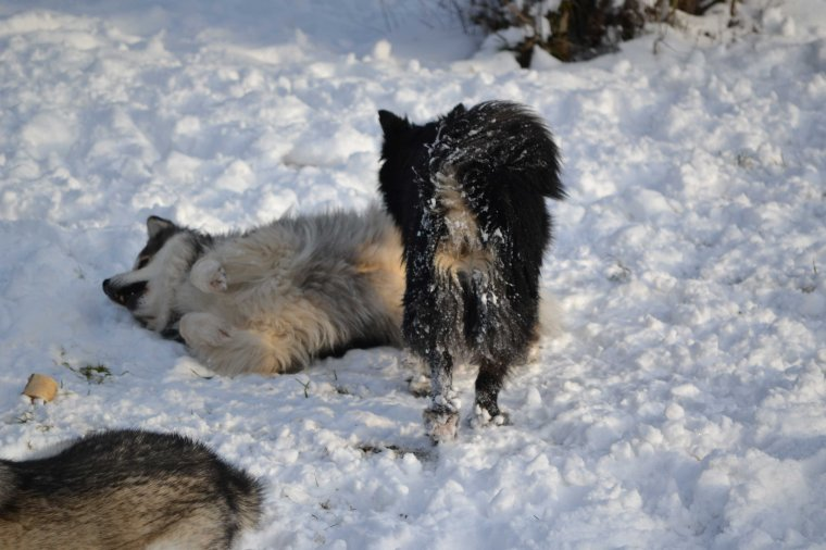 Aaaaahhh les gratouilles dans la neige!