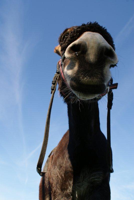 Faute de boeuf, on fait labourer par son âne. (proverbe auvergnat)^^