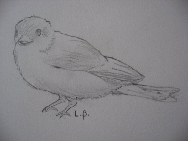 """""""petit oiseau"""""""