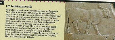 Croyances et religions de l'Egypte n°1 : Les animaux sacrés (1ère partie).
