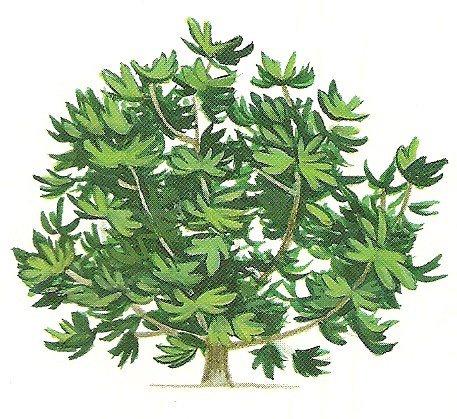 mythes l gendes et symboles de l 39 egypte n 6 les l gendes des peuples des arbres richesses. Black Bedroom Furniture Sets. Home Design Ideas