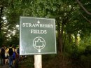 Photo de strawberry-fields-o8