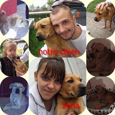 notre chien zena
