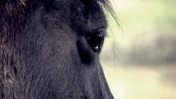 l'équitation... plus qu'une passion