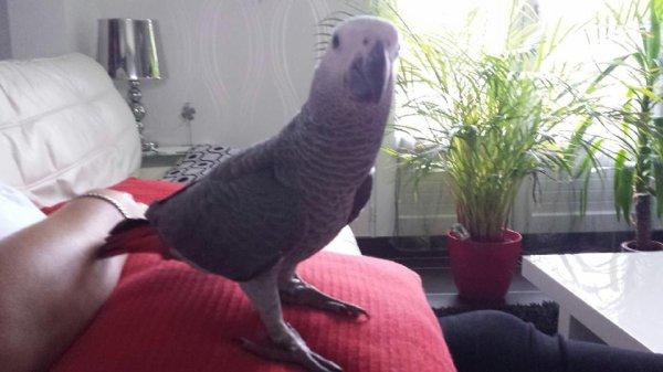et la petit dernier Paco le gentleman ♥ aussi dans sont nouveau chez lui ♥