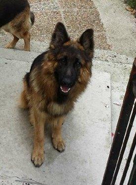 1ère photo de Guizmo depuis son départ de chez nous