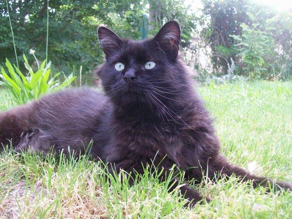 Figaro!