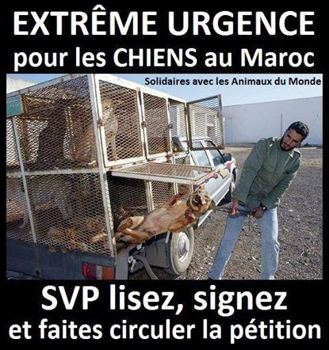 Extreme urgence :chiens au Maroc aidons-les!!!