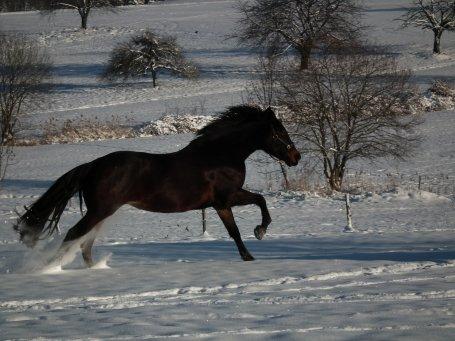 Le bonheur de la neige fait des magnifique photos♥