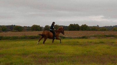 On a vu des chevaux et des cavaliers parfaitement d'accord: C'était assez souvent des chevaux de bois..