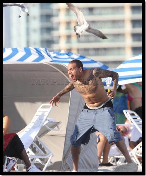 Chris Brown a été attaqué par des mouettes sur une plage de Miami, alors qu'il voulait simplement leur donnée des chips ! LOOL