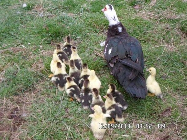 voici ma nouvelles petites familles il y a 15 bébés