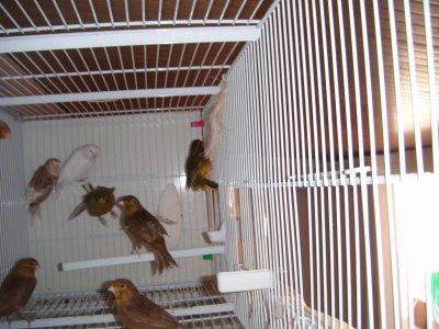 machos de cria 2011