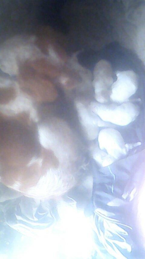Hyrise et ces bébés