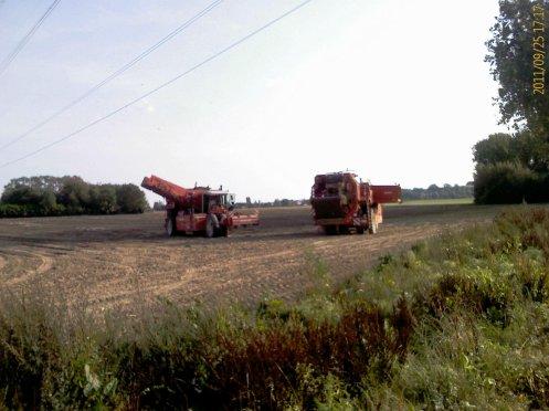 Arrachage de pommes de terre septembre 2011