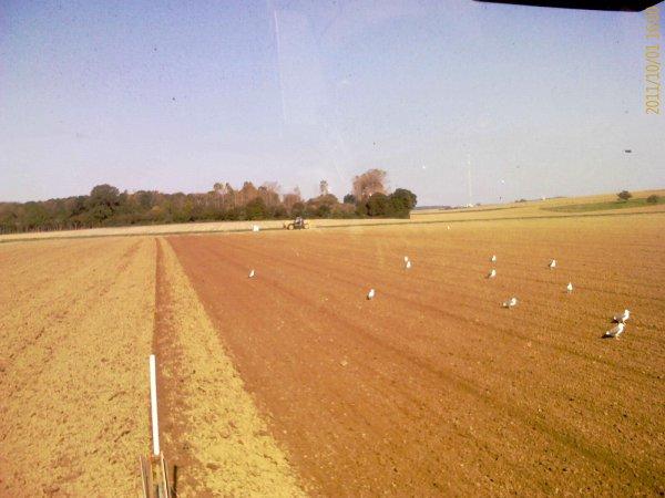 Ravitaillement en semences 1er octobre 2011