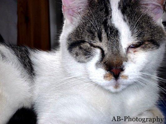 Il ne faut pas réveiller le chat qui dort. - Proverbe Français, 1989