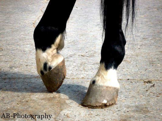 Pas de pied, pas de cheval