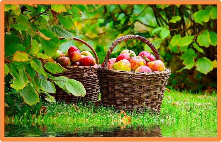 Fruits en plein hiver :