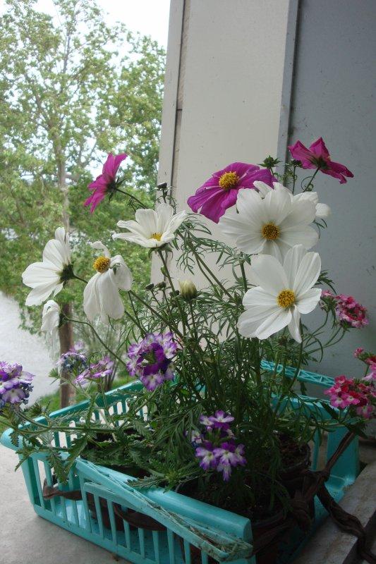 Mon jardin de fenêtre AM