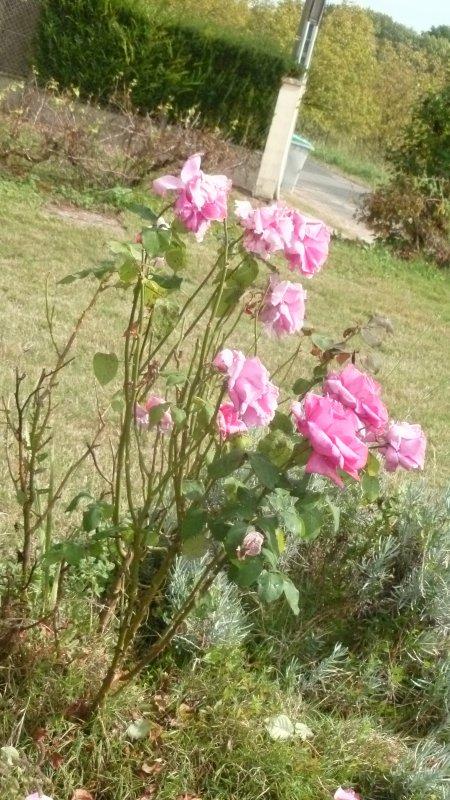 Quelle belle floraison....