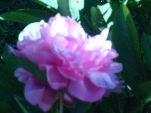 Regard sur mes fleurs...