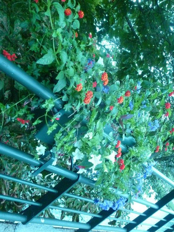 Bacs Fleuris... en vacances
