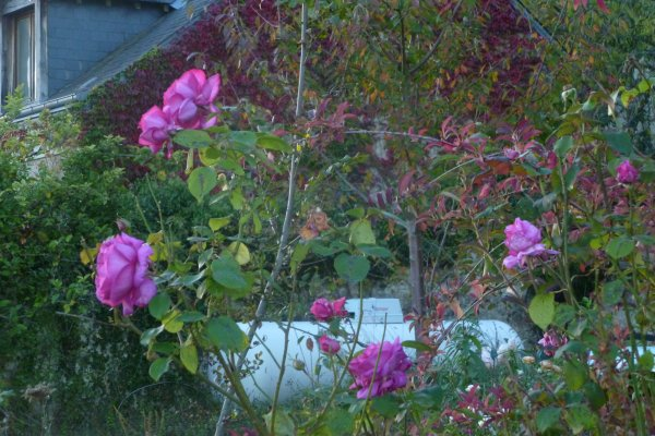 octobre Soleil fleuri