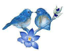 Bleu 'S