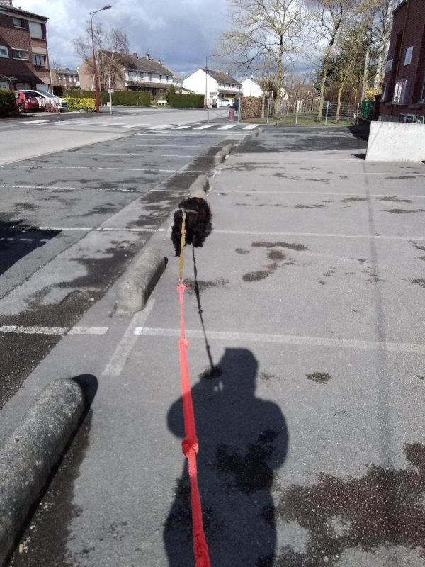 photos la team asla raid multisport aventure canine do virus furie. 2019