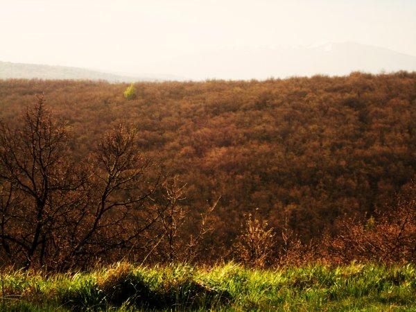 Forêt Brune