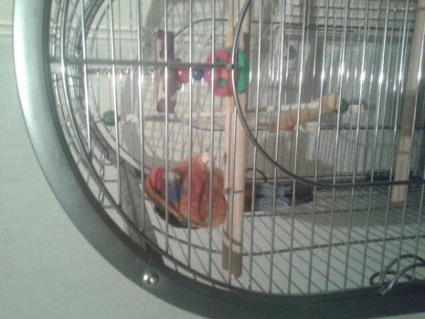 Voici mon coco