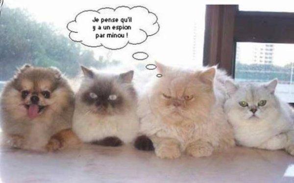 LA PHRASE LOL ! ♥