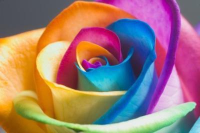 de toutes les couleurs...