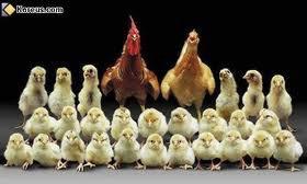 LA FAMILLE............